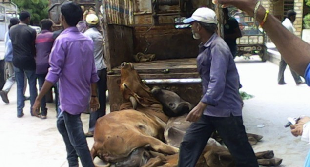 Mysterious Appearance of Cow Carcasses in Azamgarh Pointer Towards